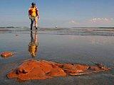 志愿者在漂有油污的浅水区行走
