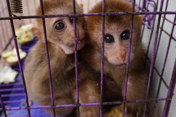 云南现盗卖食用野生动物集市 猕猴被宰杀兜售