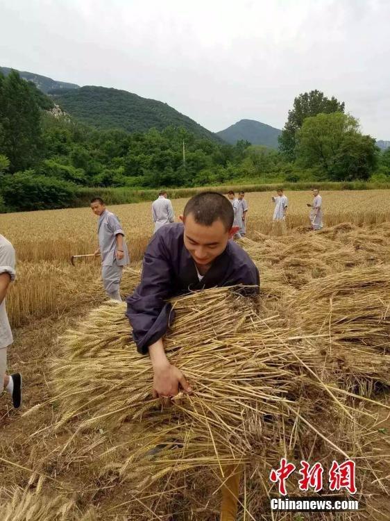 少林寺喜迎丰收季 僧众农场收麦忙 - 海阔山遥 - .