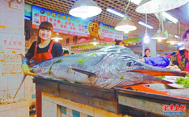 青岛渔民休渔前最后一网捕到226斤重剑鱼(图)