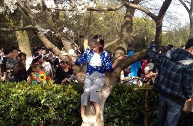 """武大""""樱花周末""""游客爬树造""""樱花雨"""""""