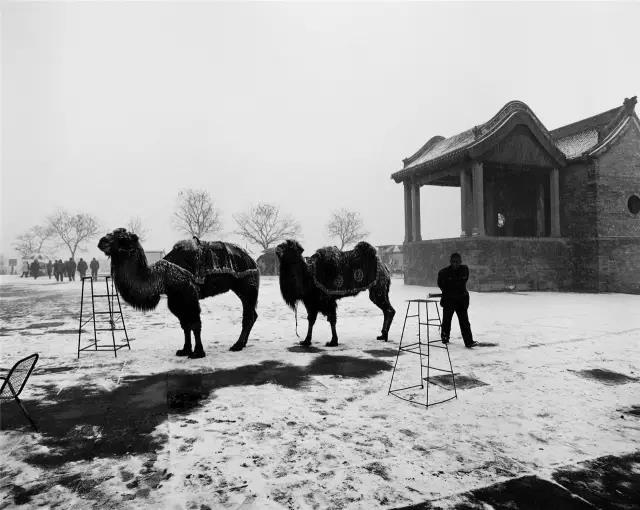2005年2月24日,河南省浚县。在古庙前的雪地上,行人从等候为顾客拍照留念的骆驼前经过。