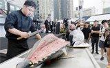 郑州200斤金枪鱼当街宰杀