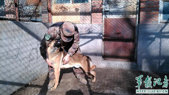 """退役军犬被贩卖?别担心,它们都住在这座""""疗养院"""""""