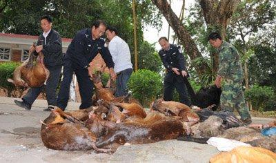 查获国家一级保护野生动物熊狸(死体)2头,刺猬2头(死体),果子狸(死体)