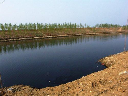江苏沭阳:开发区污水排入黄海 何以以绿养绿