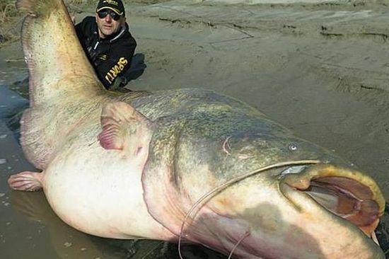 意大利男子钓上2.67米长巨型鲶鱼 重超120公斤