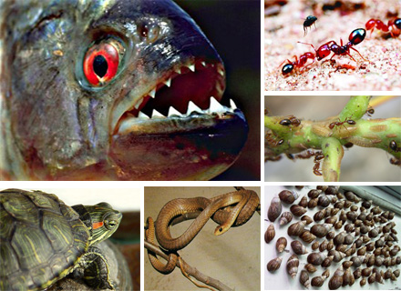 绿色一周看点:外来物种入侵 不速之客何处安放