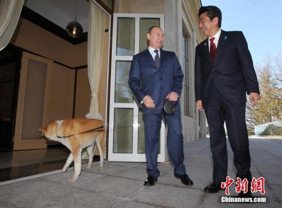 """安倍欲送狗给普京遭拒 台媒:日本""""狗狗外交""""破产"""