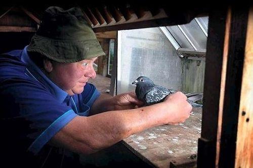 主人时隔两年再次与饲养的宠物鸽相遇,场景十分温馨。