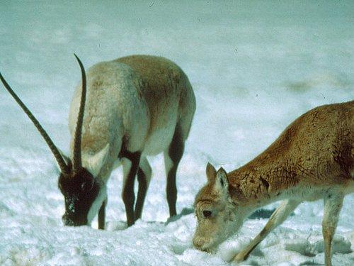 保护生物多样性NGO行动之WCS在中国