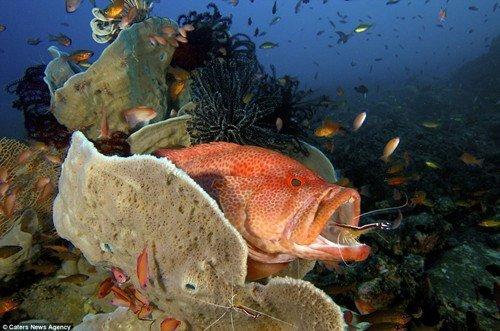 壁纸 动物 海底 海底世界 海洋馆 水族馆 鱼 鱼类 500_331