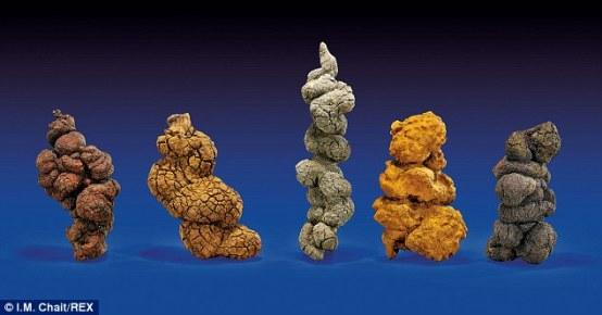 世界最长恐龙粪便化石将拍卖 长1米令人称奇