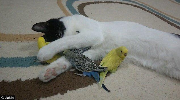 【图片新闻】友爱喵星人和小鸟做朋友 亲自帮其舔净羽毛 - 耄耋顽童 - 耄耋顽童博客 欢迎光临指导