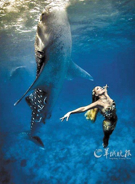 鲨鱼手绘图片唯美