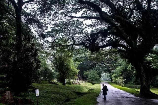 Lim博士在墓园看望自己的祖先。他有7个直系亲属葬在咖啡山,他担心自己再也见不到这些已故亲属了,也担心不能来这里抒发乡愁了,因为这个墓园即将为现代化发展让路。