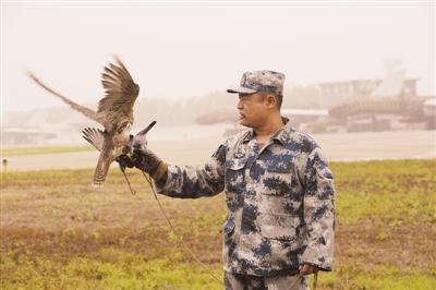 空军出奇招保障阅兵:放猎鹰巡逻养猕猴拆鸟窝(图)