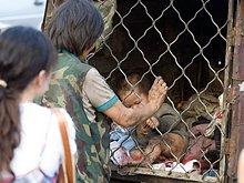 女流浪者给笼中幼童喂食