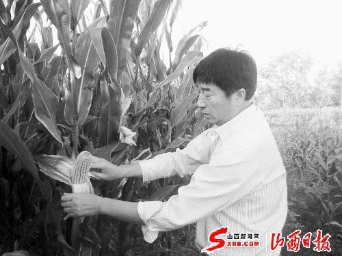 """我国玉米重要核心种质黄早四""""密码""""破译"""
