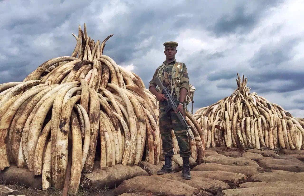 2021-03-09,内罗毕国家公园焚烧储备象牙。