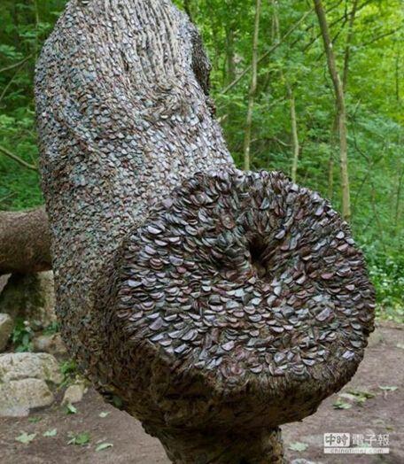 """英国老树""""长出""""密密麻麻硬币。"""