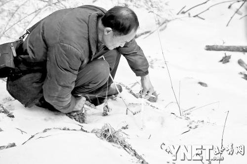 周在测量疑似老虎再遇雪盖的雪地足迹