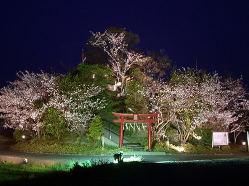 日本最矮山举行开山仪式 海拔仅6.1米