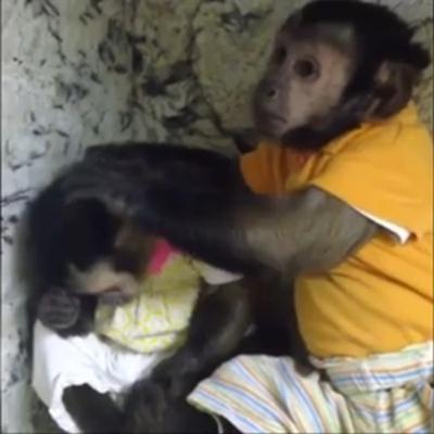 """""""暖男""""小猴安慰伤心雌猴 送给其爱的抱抱(图)"""