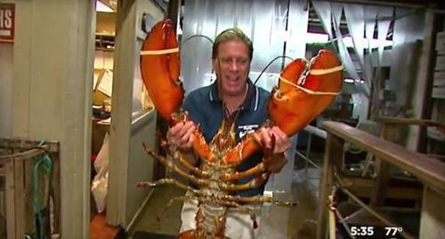 美长岛餐馆现12公斤大龙虾 专家称其已95岁高龄