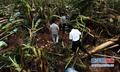 """组图:台风""""威马逊""""重创海南澄迈农业"""