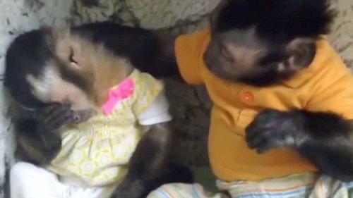 """""""暖男""""小猴安慰伤心雌猴送给其爱的抱抱(图)"""