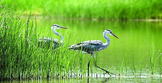 """盘锦湿地""""打鸟""""记"""
