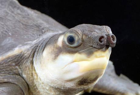 """英媒评选世界最丑动物 深海水滴鱼""""夺冠""""(图)"""