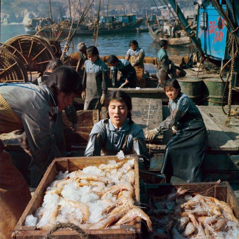 """1958年,大连獐子岛,以文淑珍为代表的几位女性冲破传统观念,毅然出海捕鱼。她们努力学习航海技术,取得了出众的业绩。1962年,她们的渔船被命名为""""三八""""号,文淑珍成为当地的第一位女船长。1971年,""""三八""""号渔船接到海事指挥部通知后,赶赴黄海,捕获了大量对虾,创造了当时对虾捕捞的高产纪录。对虾的出口是当时我们国家获取外汇的重要途径之一。"""