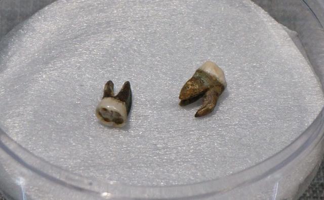 隋炀帝墓135件文物首亮相 展出杨广2颗牙(图)