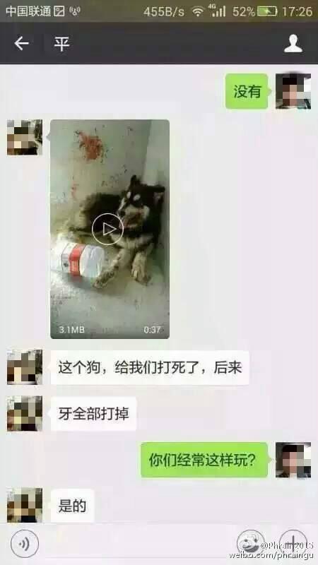 深圳虐狗男杀50余只狗取乐 律师:无法对其处罚