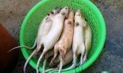江苏无锡嫌犯用老鼠肉冒充羊肉销往苏沪多地