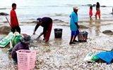 被冲上岸的海鲜泛滥成灾 泰国村民捡不过来