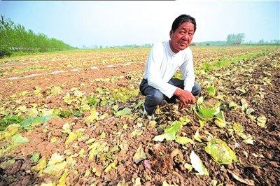 北京市场大蒜价格同期下跌50% 今年难见天价蒜