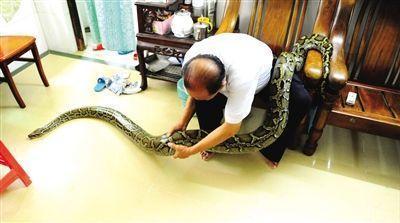 老人收養120斤蟒蛇7年當寵物 家人與蛇和諧相處