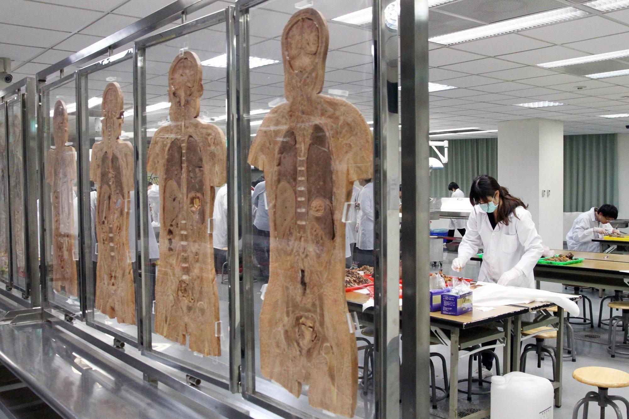 解剖课上。