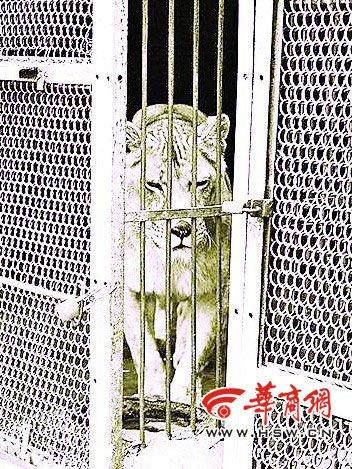 西安野生动物园一对父子遭老虎袭击致1死1伤