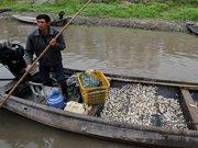 100多亩水面的鱼因干旱全部死亡