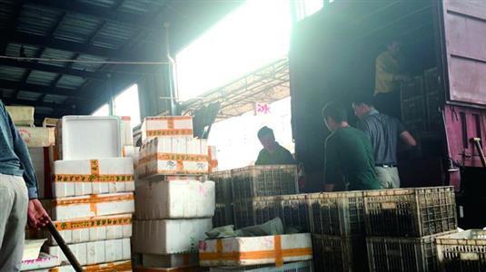 白沙洲市場內,工人將死蝦搬上貨車。