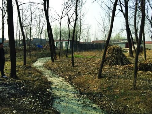 在临沂市葛沟镇西安乐村外一片污水横流的荒野中,掩埋着台儿庄战役临沂阻击战中阵亡的486名中国将士。陈学超摄