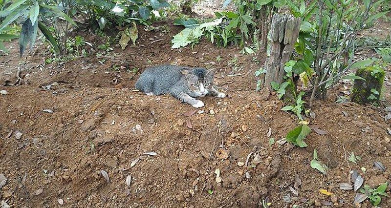 【图片新闻】印尼猫咪不舍主人离世 在墓前苦守一年 - 耄耋顽童 - 耄耋顽童博客 欢迎光临指导