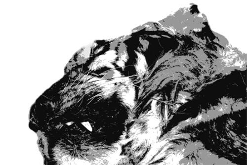 温州查获疑似东北虎尸体续:或为有钱人买来吃(图)