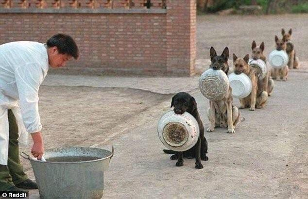 """""""狗""""富贵,勿相忘,等你来哦!"""