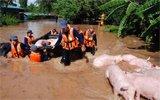 """猪场被淹 50头""""二师兄""""被活活淹死"""