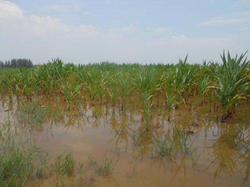 河北内蒙古东北三省等部分地区遭受洪涝灾害